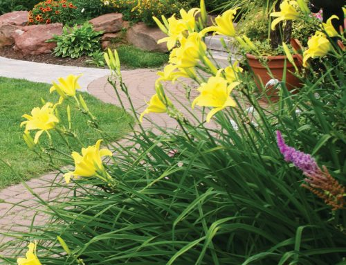 Liven up Your Landscape with A Perennial Garden